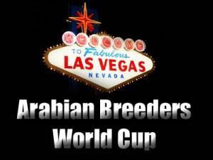 Las Vegas. Arabian Horse breeders Cup