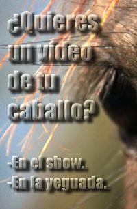 edición de vídeos de caballos