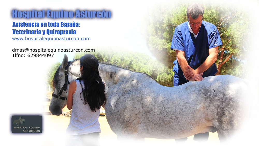 Diego Mas. Veterinaria y Quiropraxia Equina en Asturias