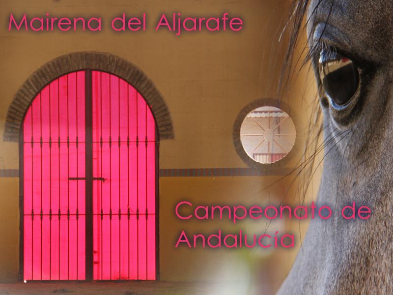 Poster de Morfológico de caballos árabes de Mairena