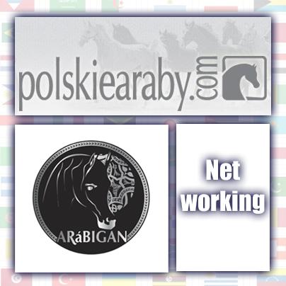 Polskiearaby y Arabigan comienzan a colaborar