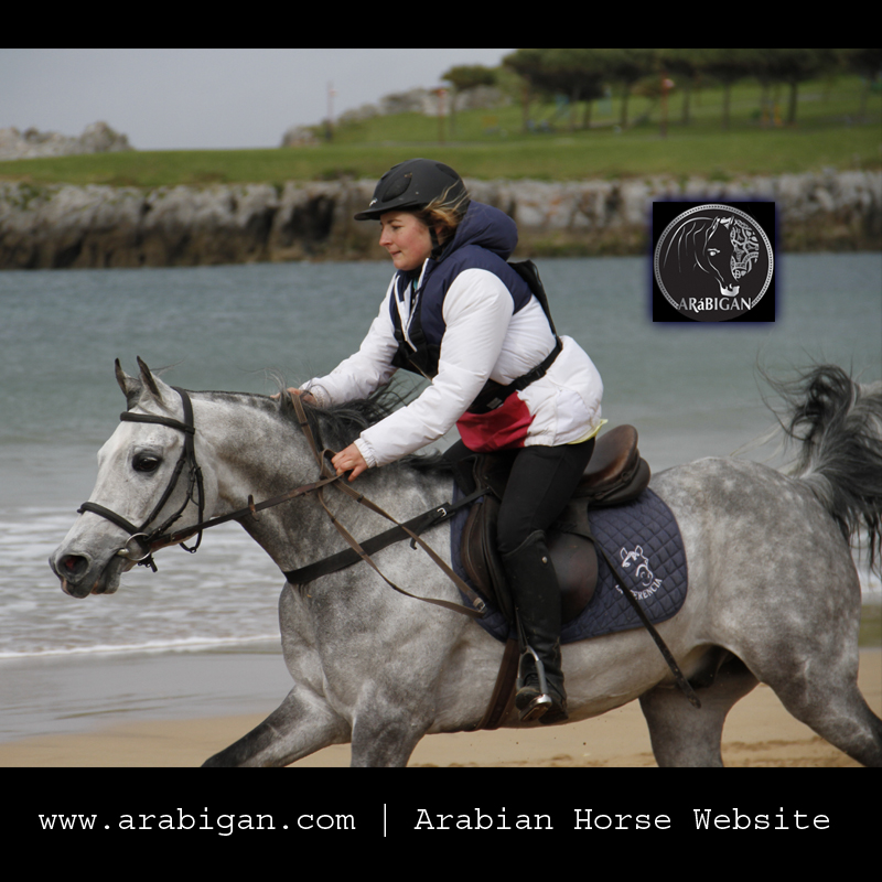 Caballo árabes Steeple chase en Castro Urdiales