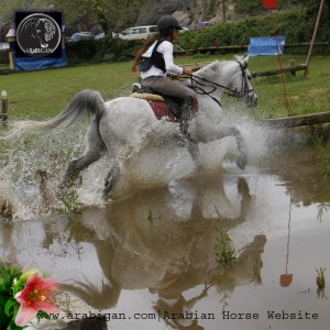cross arabesco funcionalidad del caballo árabe