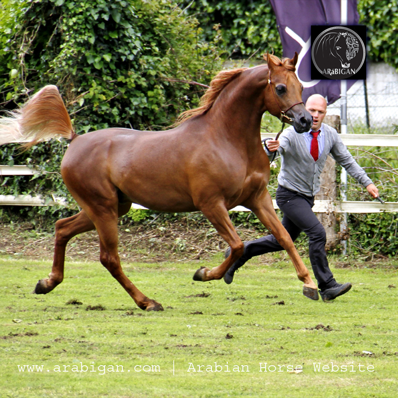 caballo alazán como se hereda el color