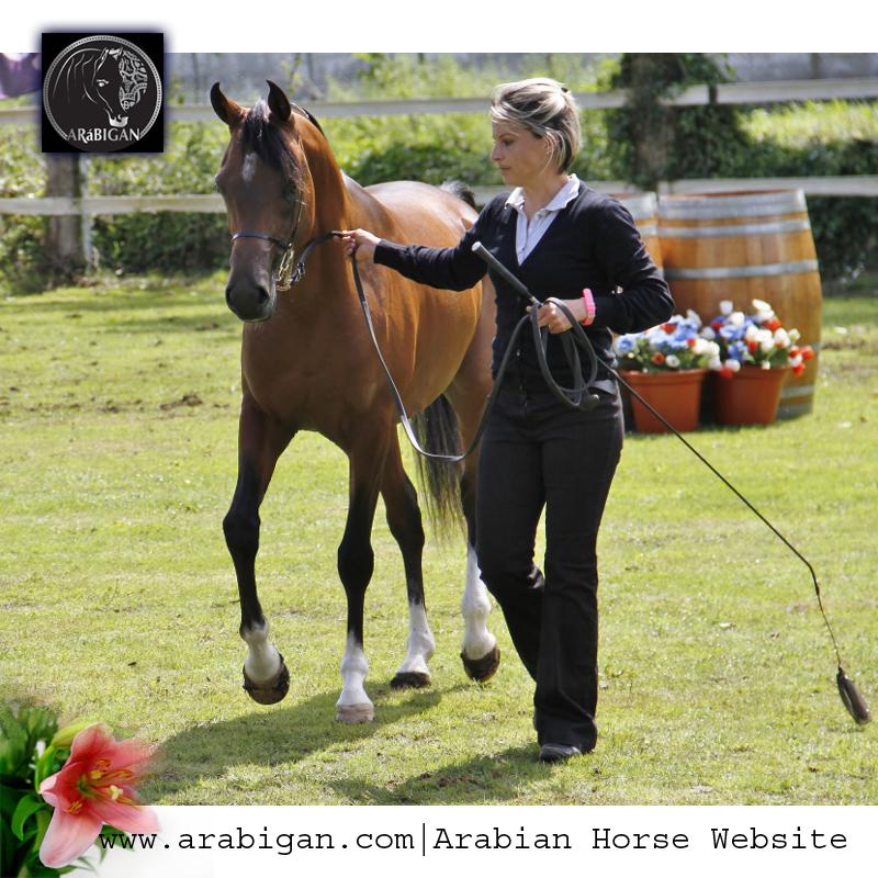 castaño genetica de capas en el caballo