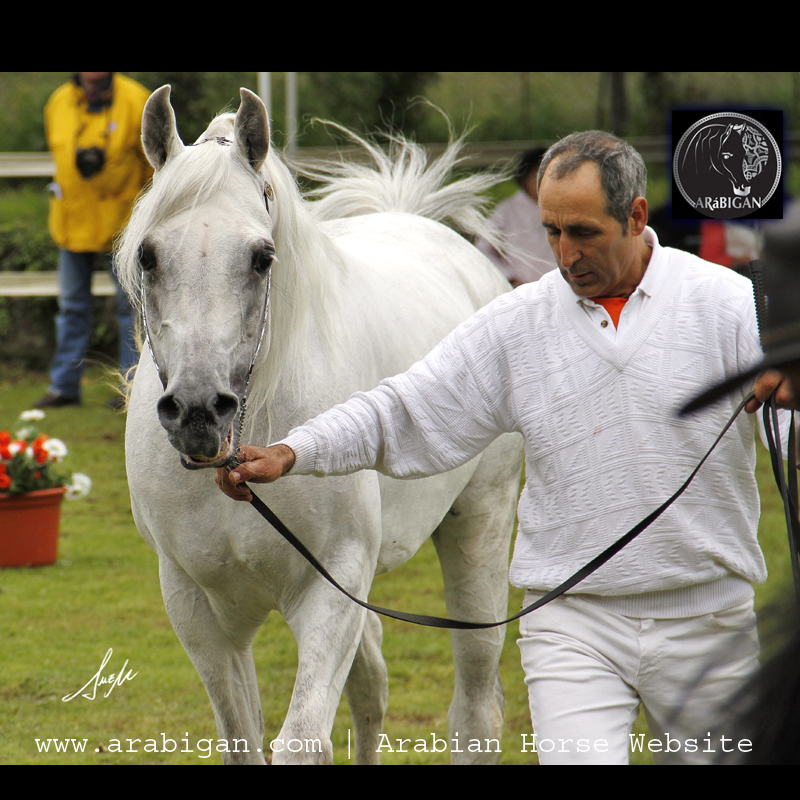 tordo genes del color del caballo