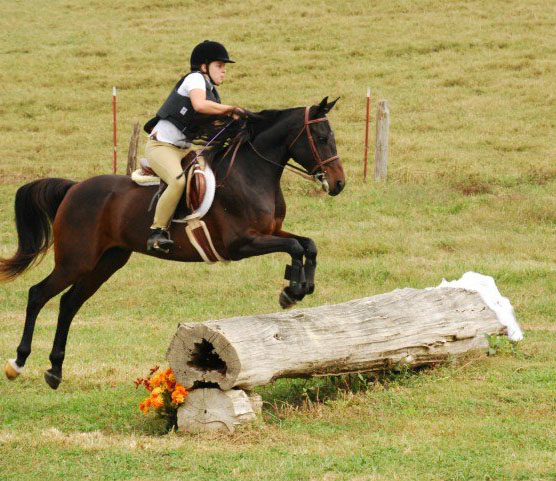 Amir caballo árabe montado