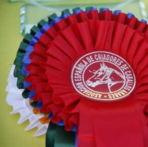 Campeonato de españa de caballos árabes