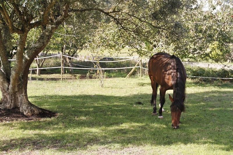 El pasto fuente fundamental de acidos grasos omega 3 en los caballos