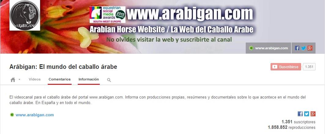 canal de videos de caballos árabes