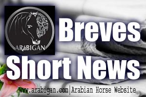 noticias breves del caballo Pura Raza árabe