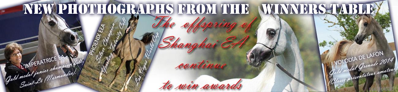 Descencientes premiados de Shanghai EA