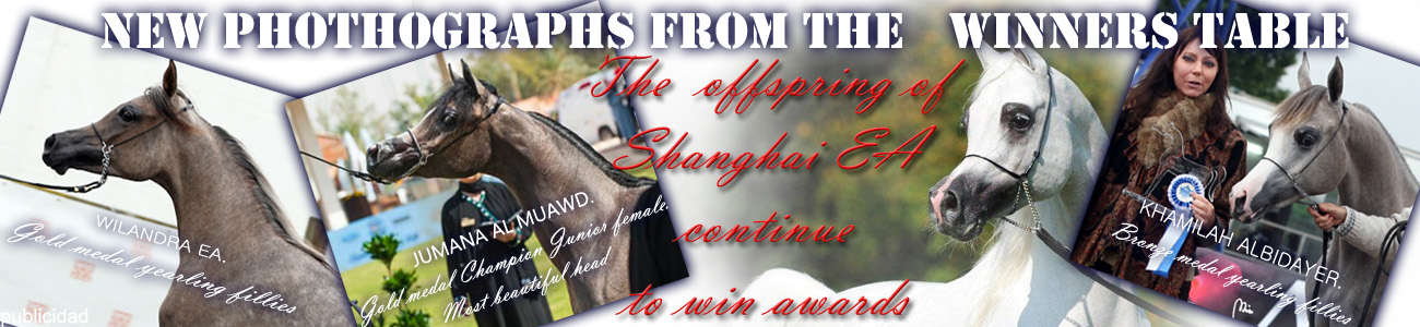Offspring of Shanghai EA. Awards