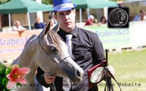 Campeonato de potras caballos árabes Arabesco