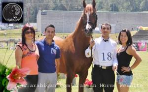 portada galeria fotografica de caballos arabes
