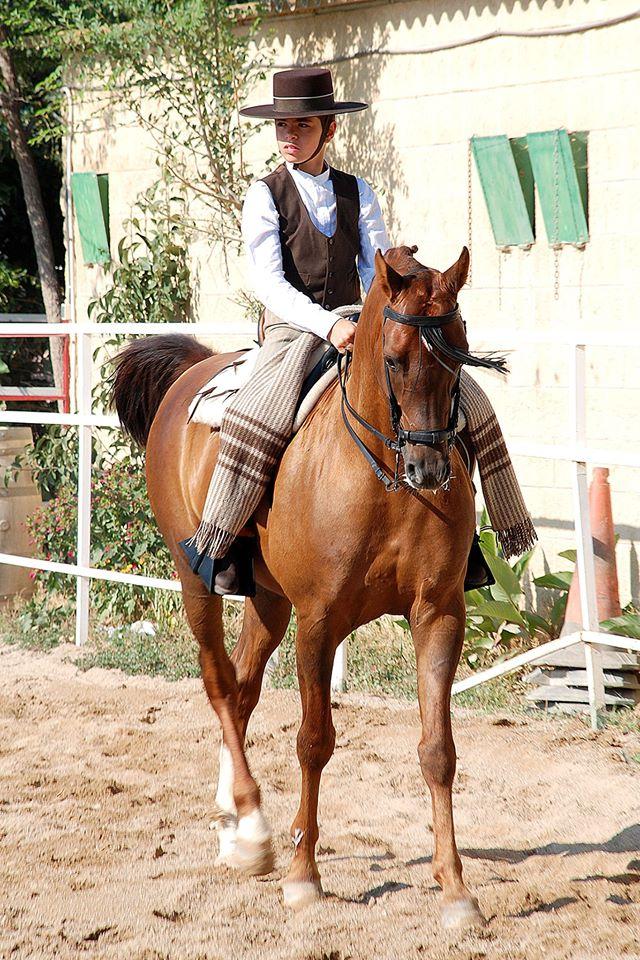 Escipion MA , caballo árabe en doma vaquera
