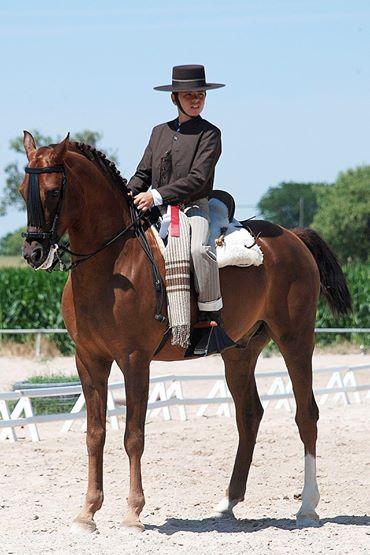 caballo árabe en Doma vaquera