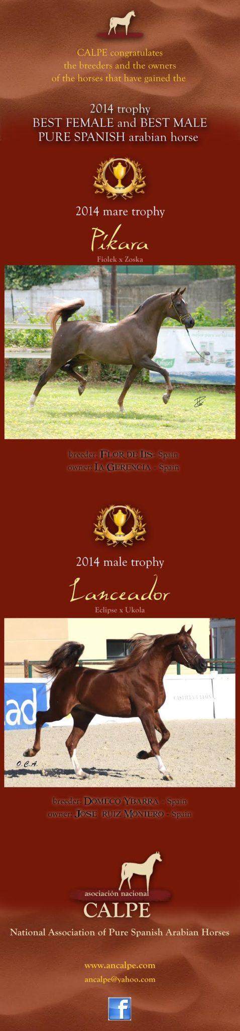 Trofeo CALPE a los mejores Pure Spanish arabian horse