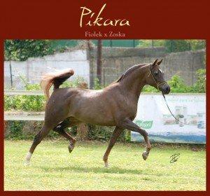 Pikara premio CALPE Pure Spanish
