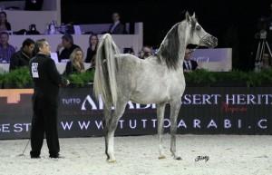 Juan Murillo en el Campeonato del Mundo de caballos árabes