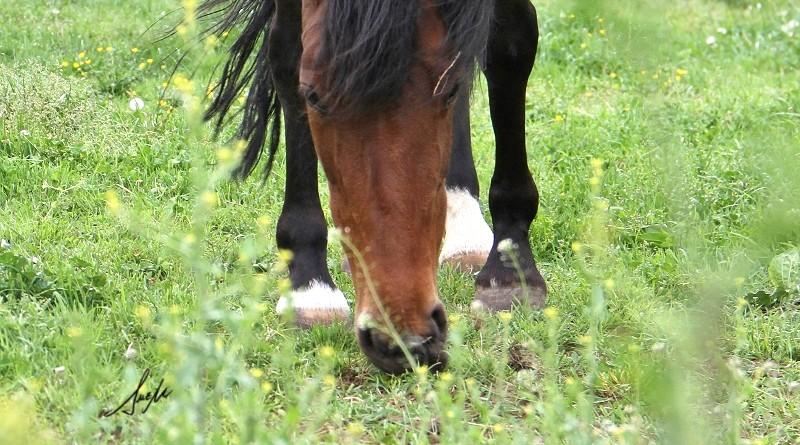 ulceras en caballos