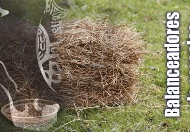 Balanceadores en la alimentación del caballo: los grandes desconocidos