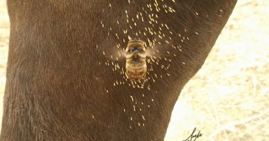 reznos en los caballos