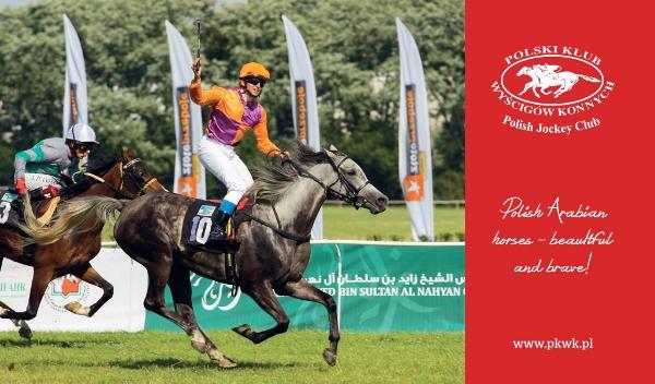 carreras de caballos arabes
