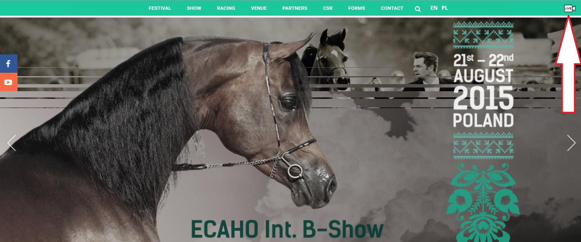 en directo desde polonia caballos arabes