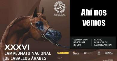 cartel campeontao de españa de caballos arabes copia