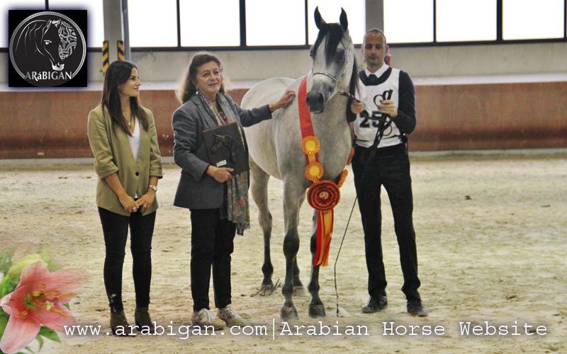 Campeonato de España de caballos árabes abha yaiti