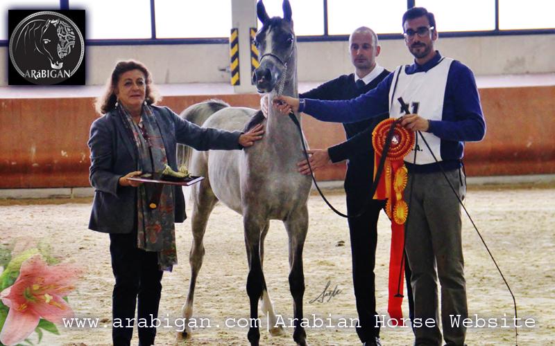 Campeonato de España de caballos árabes abha zanzybar