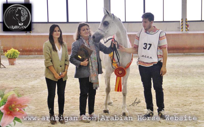 Campeonato de España de caballos árabes kaliope ea