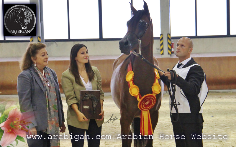 Campeonato de España de caballos árabes rhr bellacontesa