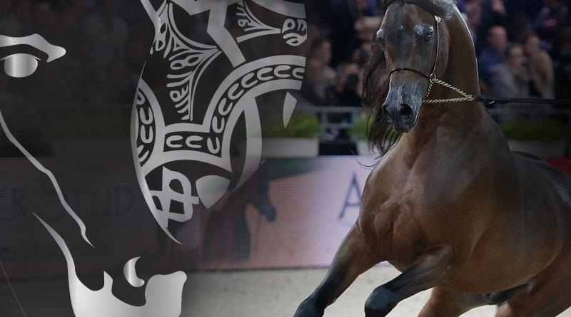 El campeonato del Mundo de caballos árabes de París continua