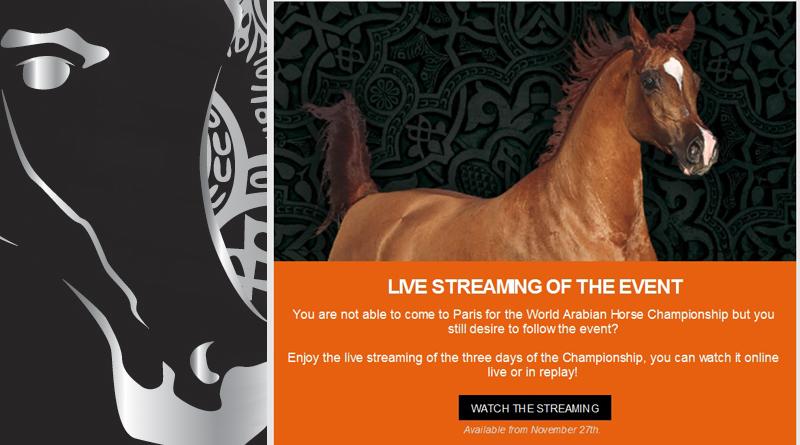 en directo el campeonato del Mundo De caballos árabes
