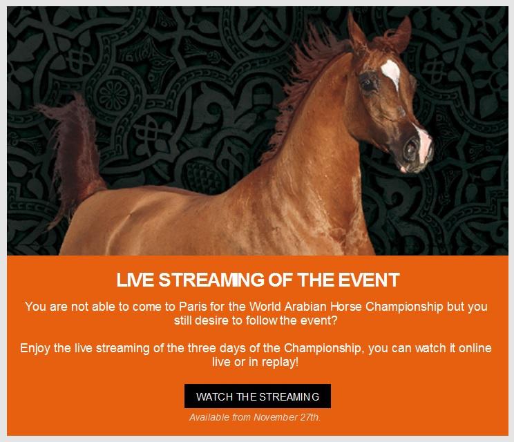 en directo el campeonato del mundo de caballos árabes de Paris
