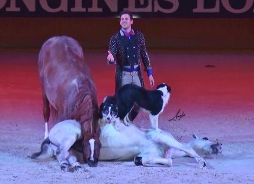 Nika, caballo árabe, border collie y Santi Serra