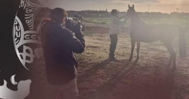 Reportaje sobre el caballo árabe en TVE