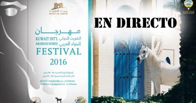 caballos arabes en directo Kuwait 2016