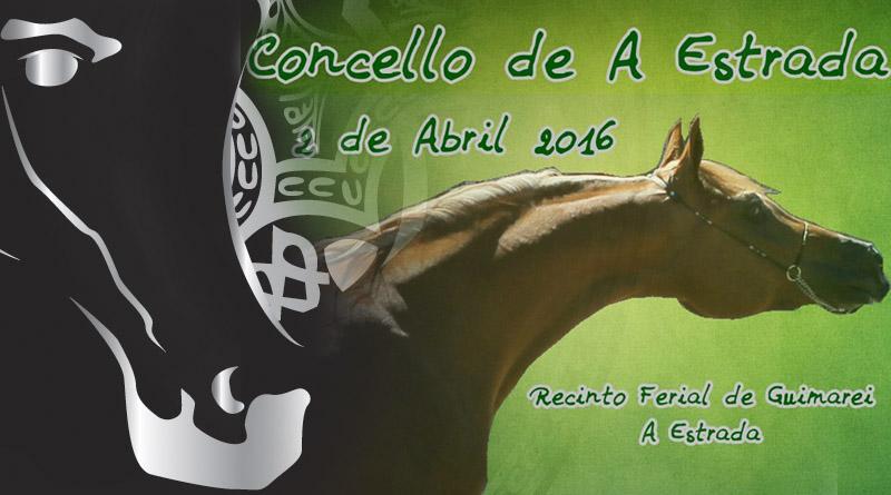concurso morfologico de caballos arabes a estrada