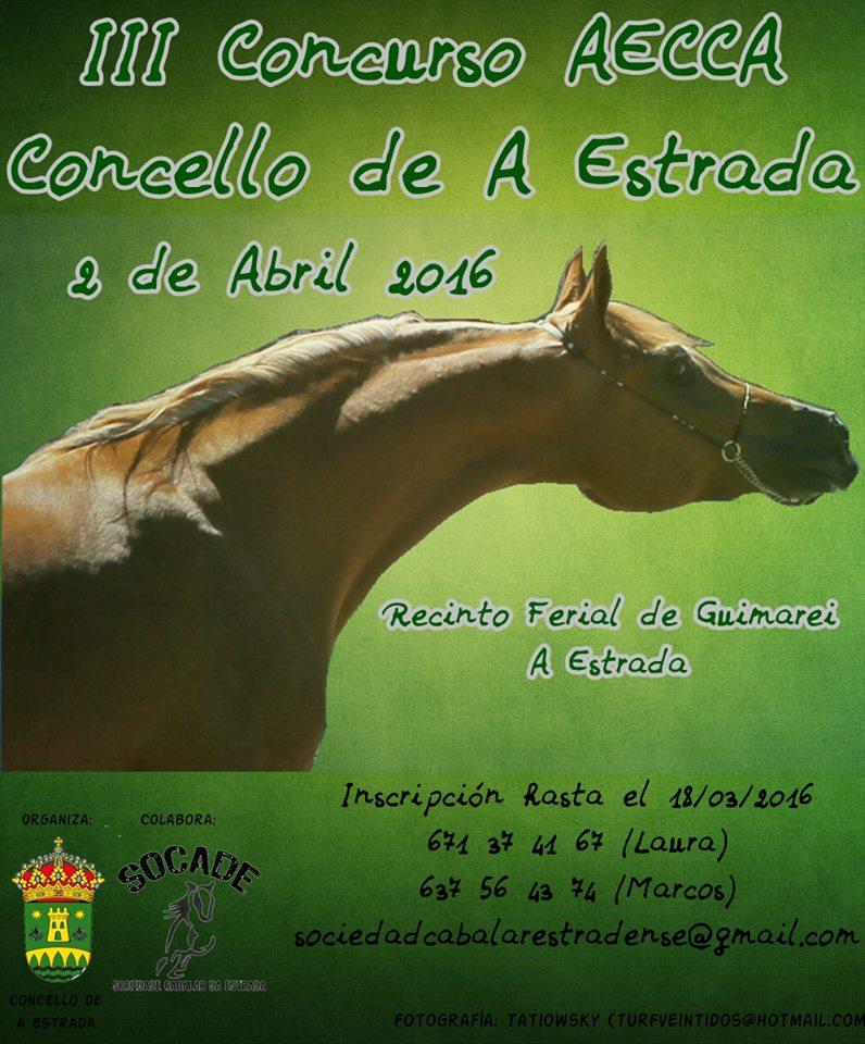 morfologico de caballos árabes en A Estrada