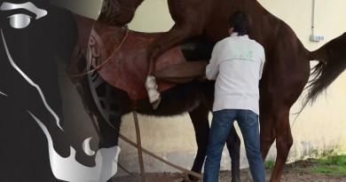 reproducción en caballos