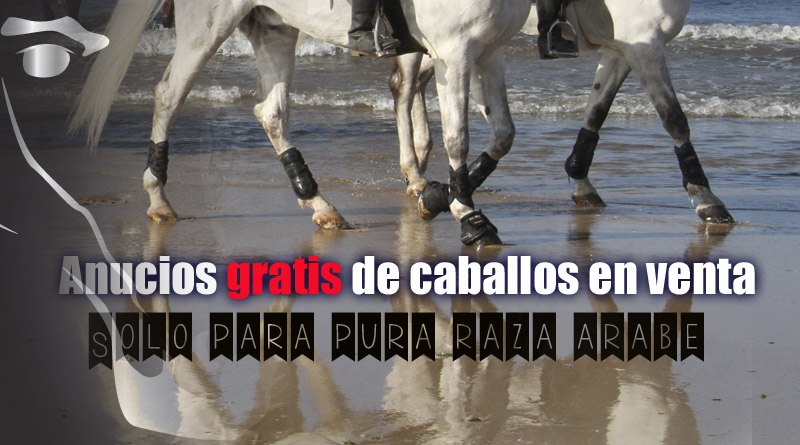 caballos arabes en venta anuncios gratis