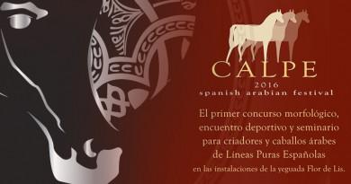 Morfológico de caballos árabes pure spanish