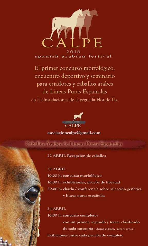 show de caballos arabes en España