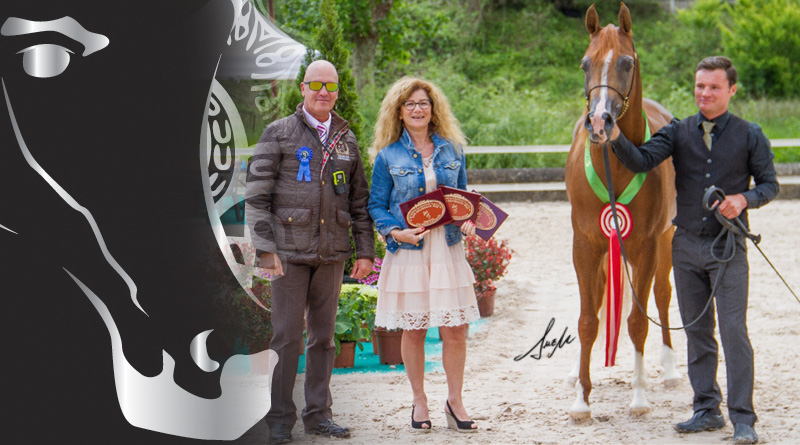 caballo arabe medalla de oro en arabesco 2016