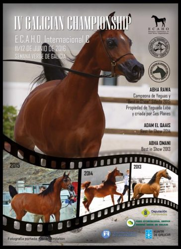 campeonato de Galicia de caballos arabes- arabigan.com