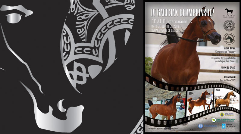 campeonato de caballos arabes de silleda 2016