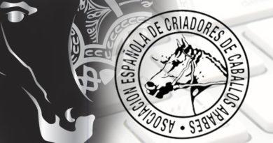 Campeonato Nacional de caballos árabes de España